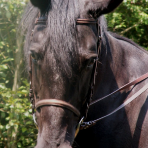 Leather-Bridle-Reins-300x300